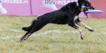 Latające Psy 2019