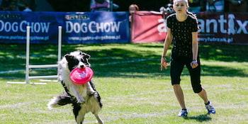 Latające Psy 2017