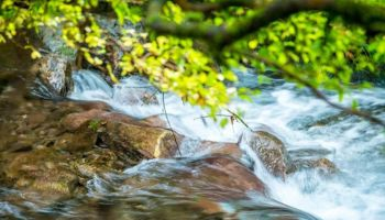 Jak oszczędzać wodę? 5 prostych zasad