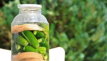 Jak kisić ogórki? Poznaj sprawdzony przepis i kilka przydatnych tricków! [fot. Pixabay]