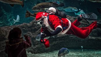 Św. Mikołaj i jego pomocnicy...