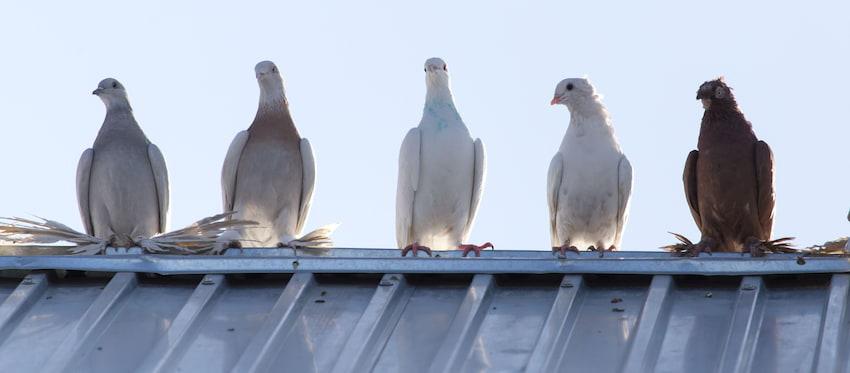 Zabezpiecz dach przed ptakami. Sprawdź jak to zrobić