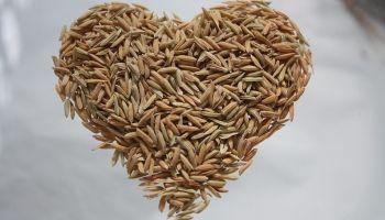 W nowym roku bądź fit z ryżem brązowym marki Britta
