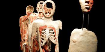 Wystawa Body Worlds