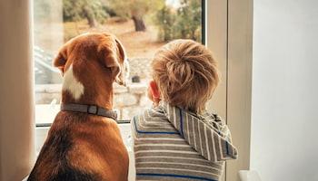 Pies i dziecko - czy to dobry pomysł?
