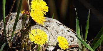 Wiosna w Poleskim Parku Narodowym